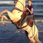 Stunt Horse and Rider