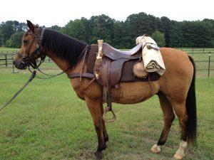 Daniel Boone horse
