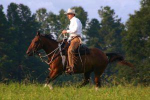 Ed in gallop