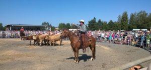 Finland cow demo July 26, 2014